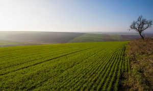 Договор субаренды земельного участка сельскохозяйственного назначения